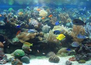 Aquarienwelten